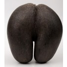 Antique African X-Large Coco de Mer Seychelles NutSeed 19th Century